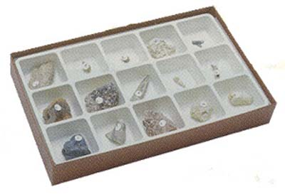 Types of Fossilization Collection~