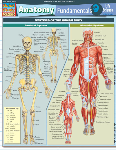 8100 20 Anatomy Fundamentals Human Life Science
