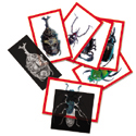 Insect X-Rays & Picture Cards